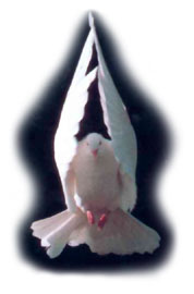 The Holy Spirit appeared in the form of a Dove